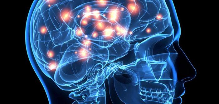 brain cells and mycotoxins